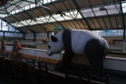 a panda bear in Cardiff Market, not sure if it was for sale