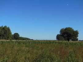 Mazovian plains
