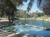 hot pools at Gan HaShlosha National Park